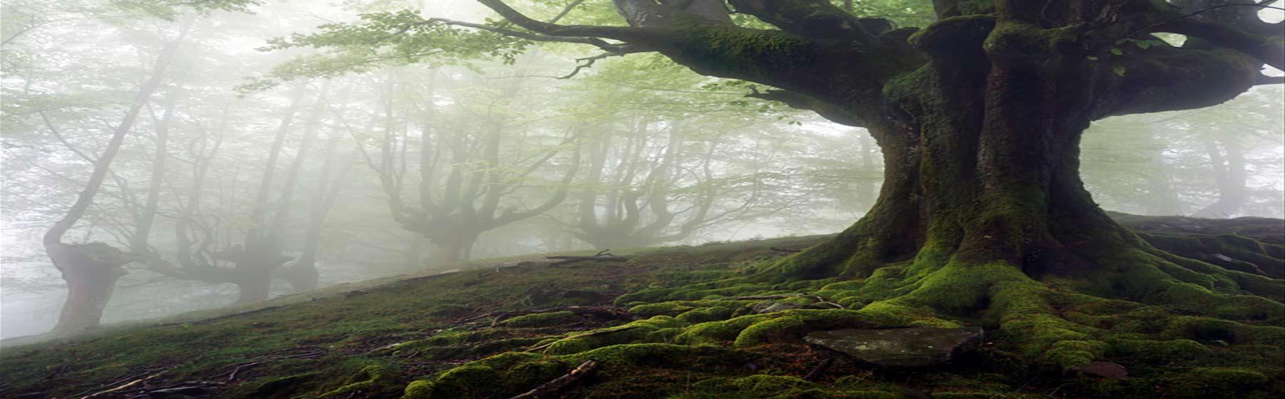 arbre-zoom